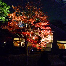 ライトアップ前川國男邸